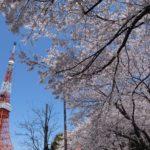 芝公園お花見イベント情報!日本最古で東京タワーのおひざ元の公園は花見パーティースポット!【東京・港区】