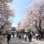 2017年東京・大阪の花見の見ごろの開花時期予想!開花宣言、満開発表とはどういう意味?