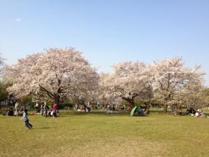 1篠崎公園 花見