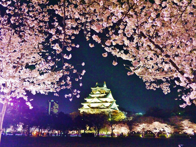 1大阪城公園 夜桜イルミナージュ