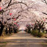 造幣局桜の通り抜けはお花見シーズンだけ開放される贅沢な桜イベントの名所♪【大阪・北区】