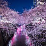 目黒川でのお花見イベントは場所取りやパーティーはできる?西郷山公園も【東京・目黒区】