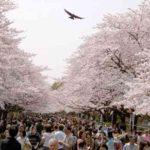 上野恩賜公園は世界から観光客が集まるお花見イベントのメッカ!パーティーもできるスポットの紹介【東京・上野】