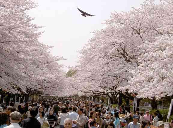 1上野恩賜公園 お花見