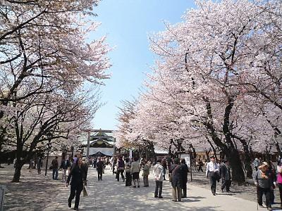 1靖国神社の桜