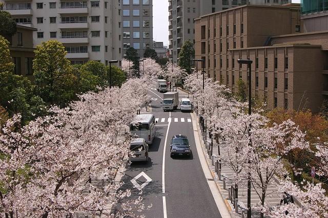 1都内お花見バスツアー