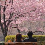 春一番の大きな行事と言えば桜!婚活や東京街コン以外に、好きな人と過ごすお花見デートのポイント6つ!
