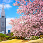 新宿御苑でお花見イベントはノンアルコールでも楽しめる!パーティーには不向き【東京・新宿】