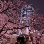 ミッドタウン・六本木ヒルズ周辺のお花見イベント情報!ライトアップも美しい♪ガーデンパーティーも【東京・港区】