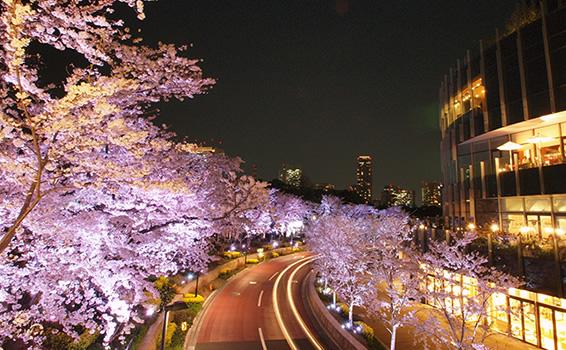 1東京ミッドタウン お花見