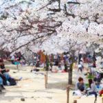 東京街コンでお花見とバーベキューができる公園や河川敷などご紹介!