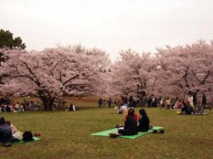 1光が丘公園 花見