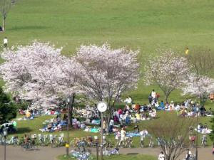 1 大島小松川公園 花見