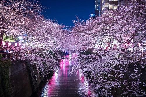 1目黒川の桜花見
