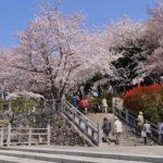 飛鳥山公園はお花見イベントスポットでありモノレールも楽しめる!場所取りや混雑度もご紹介【東京・北区】