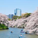 ボートやライトアップで花見イベントを楽しめる千鳥ヶ淵公園と靖国神社周辺まとめ【東京・千代田区】