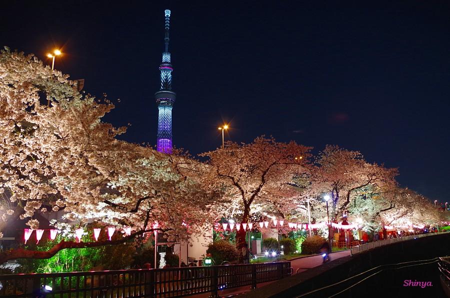隅田川の屋形船からの夜桜見物